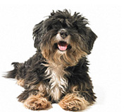 Assurance chien et chiot